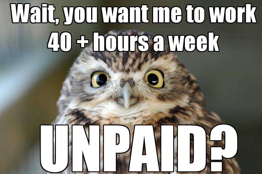 Unpaid-Owl1